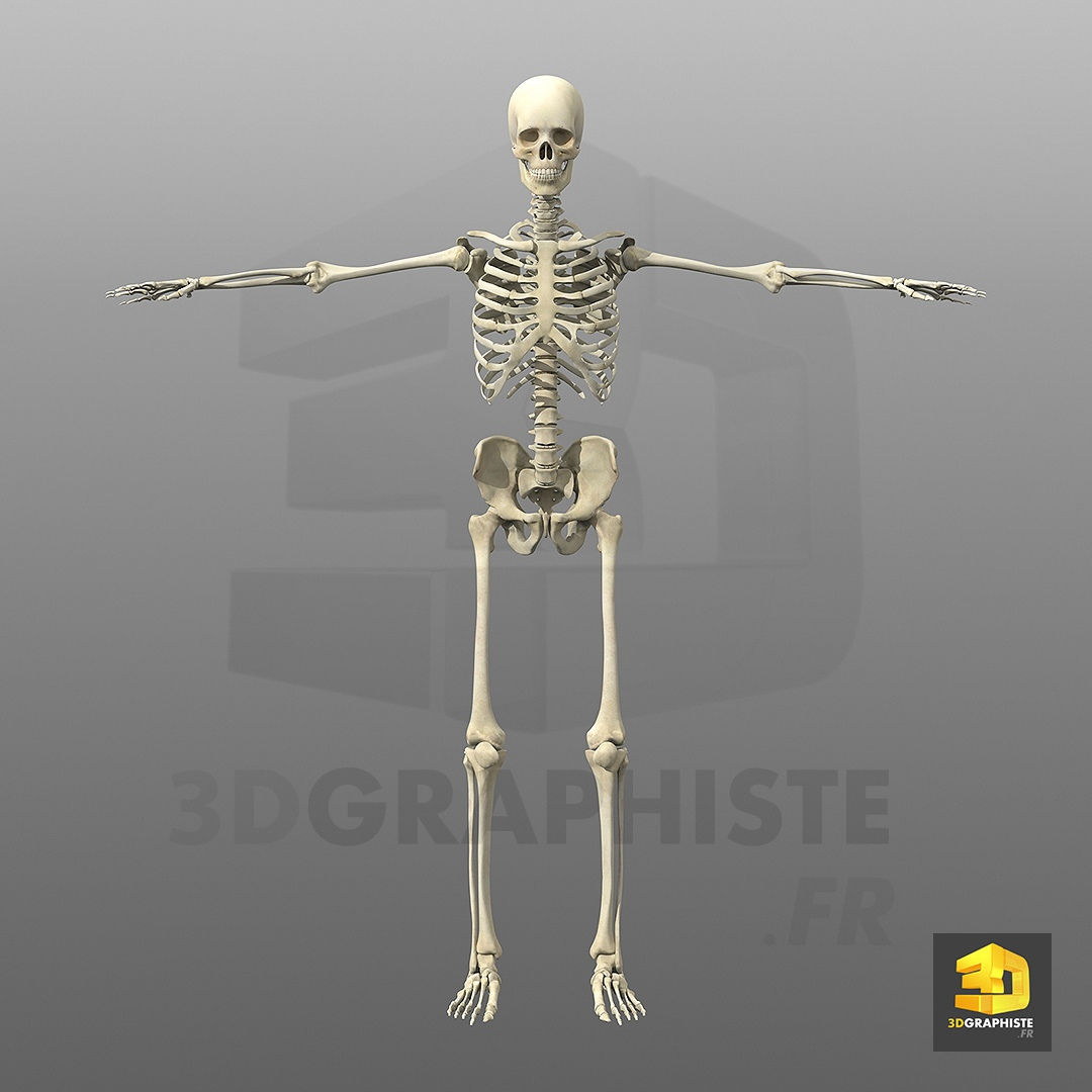 mannequin anatomie humaine
