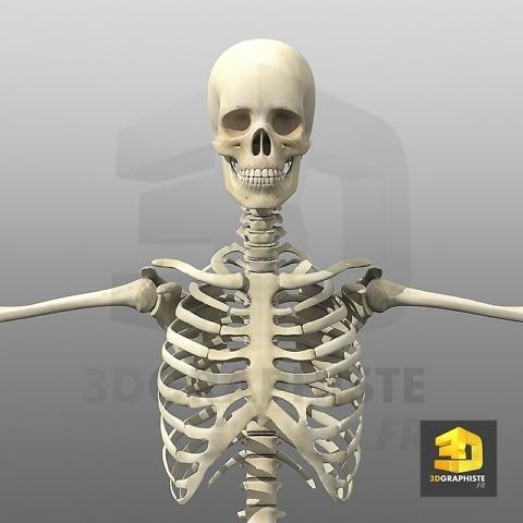 Modelisation 3d - squelette humain