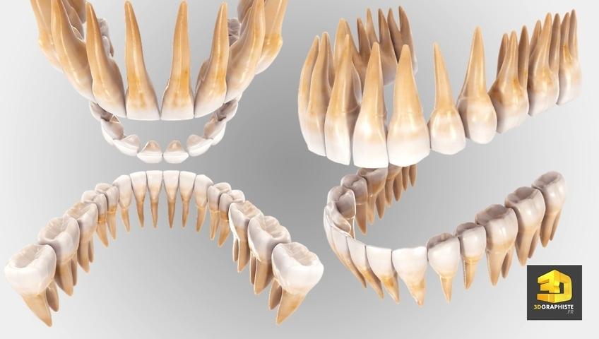 Dentition dents en 3D