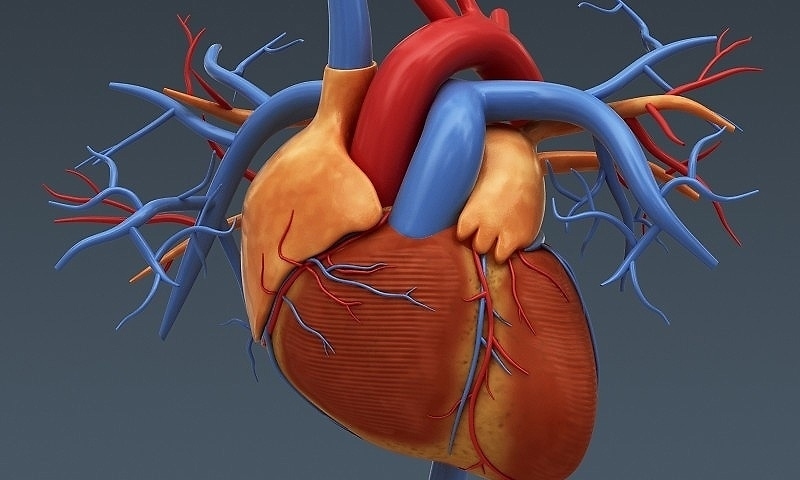 graphiste 3d medical illustration du coeur