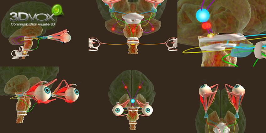 Animation 3D medicale - nerf optique