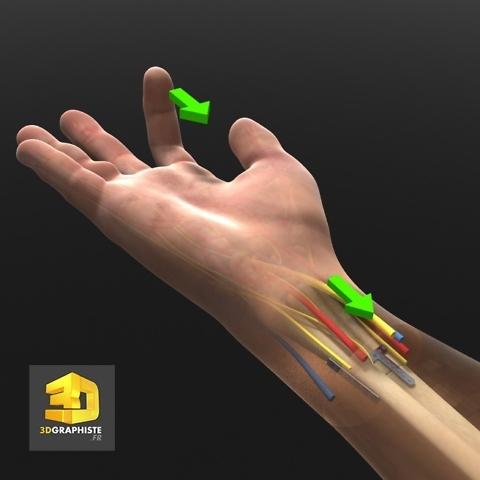 Infographie 3D médicale - tendons main