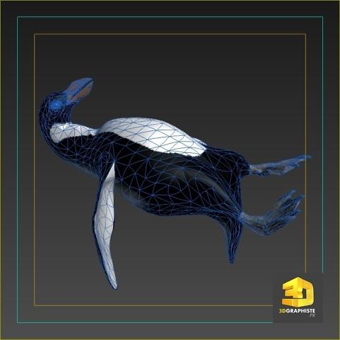 modélisation 3d pingouin