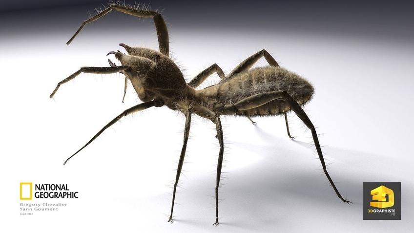 Rendu 3d d'un scorpion - Modelisation 3d d'animaux